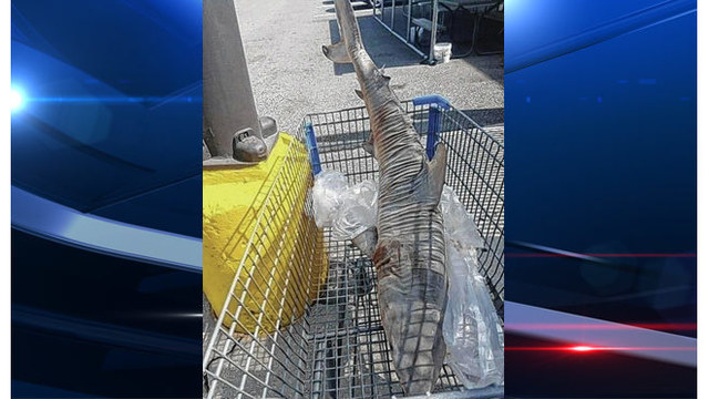 Dead shark found in shopping cart in store parking lot