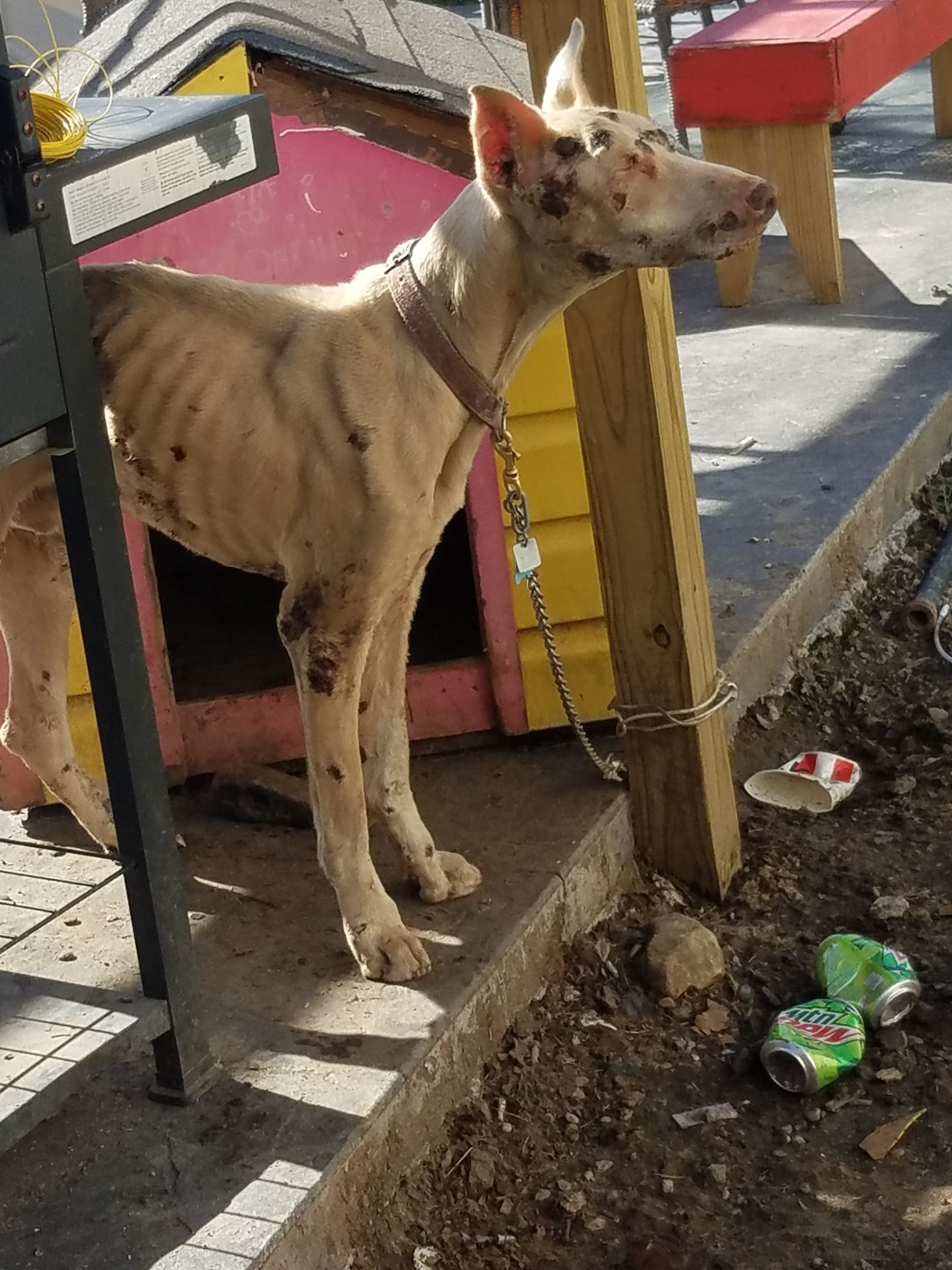 Starving Dog found in Butler County